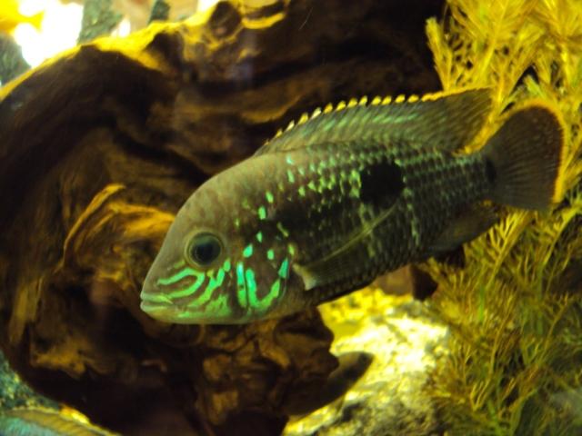 Neon fish in the aquarium at Joey's