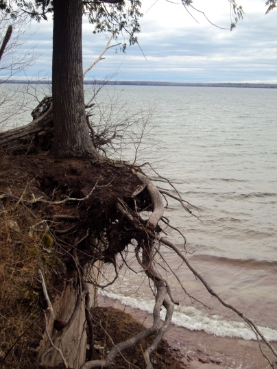 Roots dangle over cliff