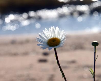 Daisy at First Sand Beach