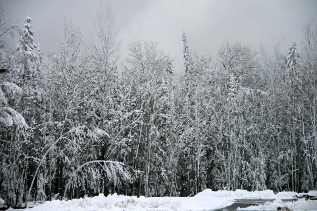 White.  Winter.  World.