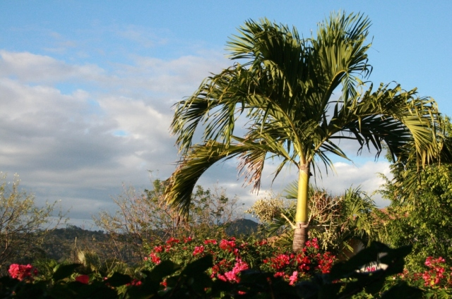 Land of palm trees and flowers