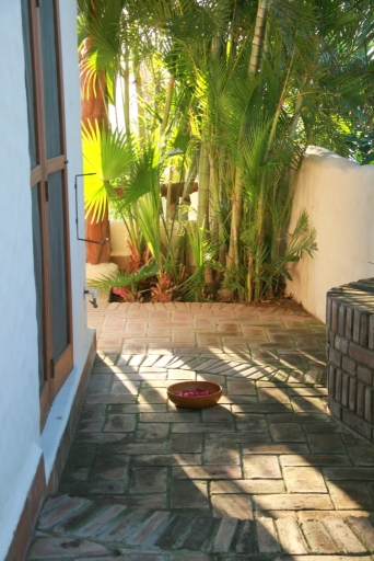 Bowl of petals, palms, brick pathway