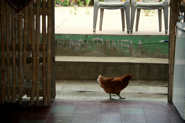 Oh, look--a chicken in a coffee shop!  (We must still be in Nicaragua...)