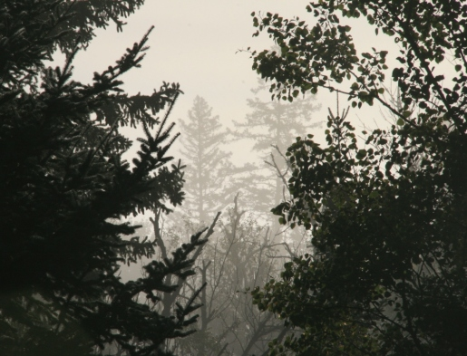 Woods in fog