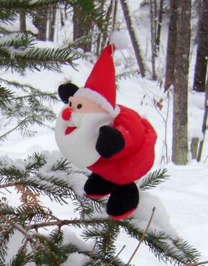 Santa pauses in an evergreen