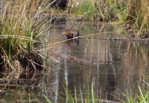 Hark, a beaver! (2010)