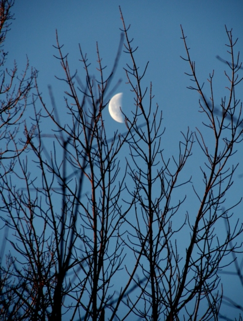 Moon through the tree branches yesterday morning