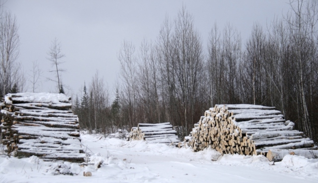 Crop of felled trees heads to market