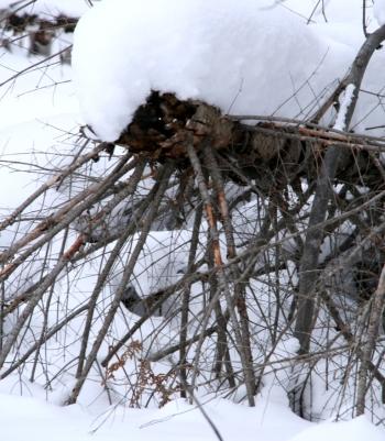 Preciousness of fallen tree-feet