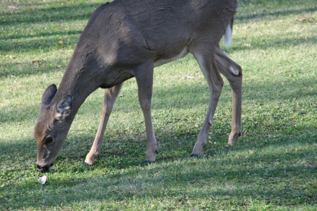 The deer looked like this.  Only imagine snow on the ground.
