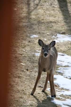 Will this deer (photo from last year) still be alive come May?