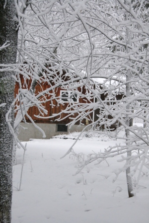 Is that a house behind those snowy branches?
