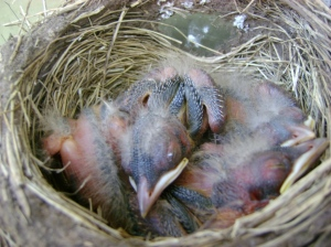 Perhaps it's the longing for life which creates life...even baby robins...