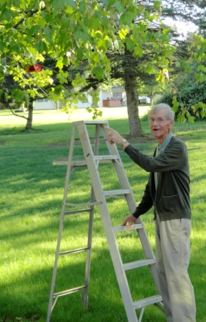 Dad steadies the ladder to hang the new hummingbird feeder