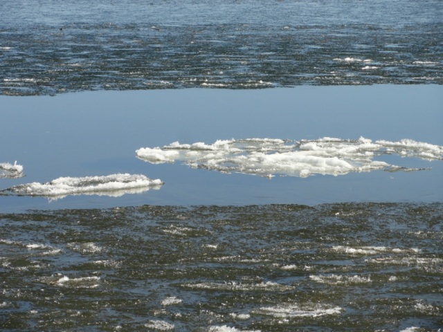 It breaks into thousands of floating icebergs