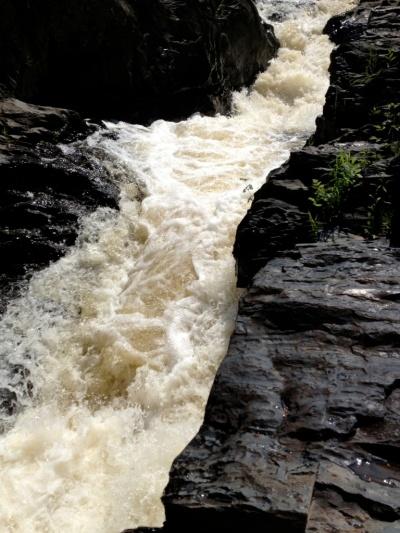 The roaring foaming Silver River waterfalls