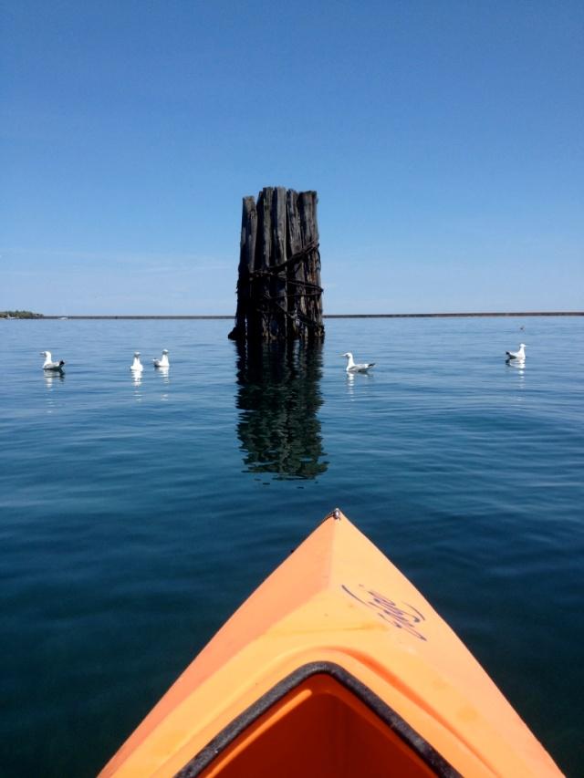 Kayak, seagulls