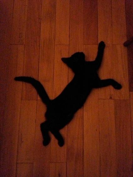 Cat?  Or cattywampus?