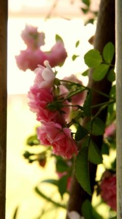 Soft ambiance