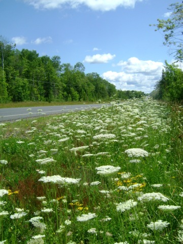 Summer roadsides