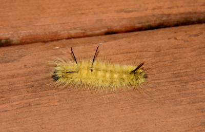 Caterpillar on deck