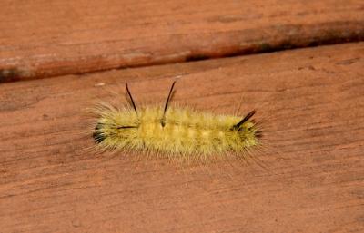 Caterpillar on deck