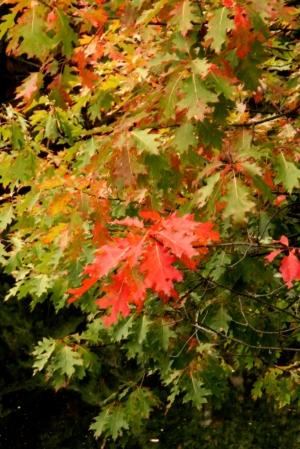 Flush of autumn color