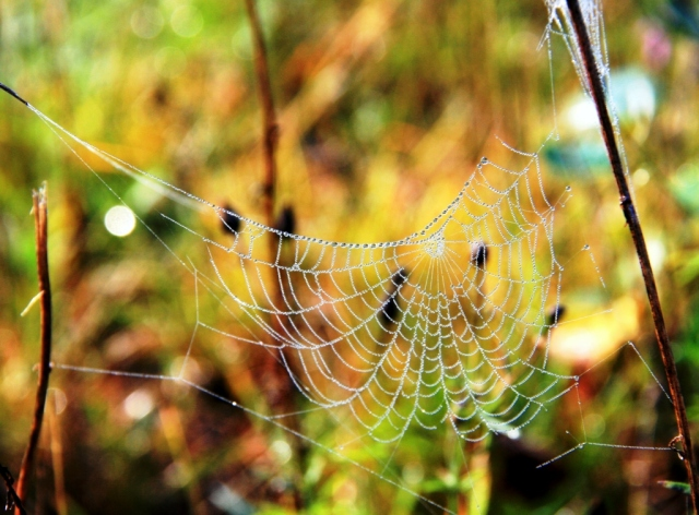 Catching blessings in the spiderweb of life