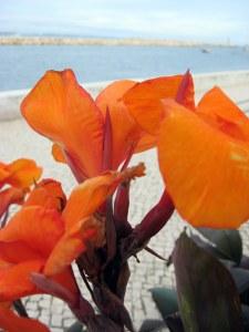 Flowers, sea