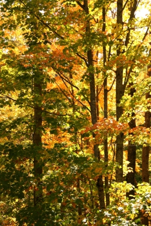 Surrounded by a yellow and orange forest