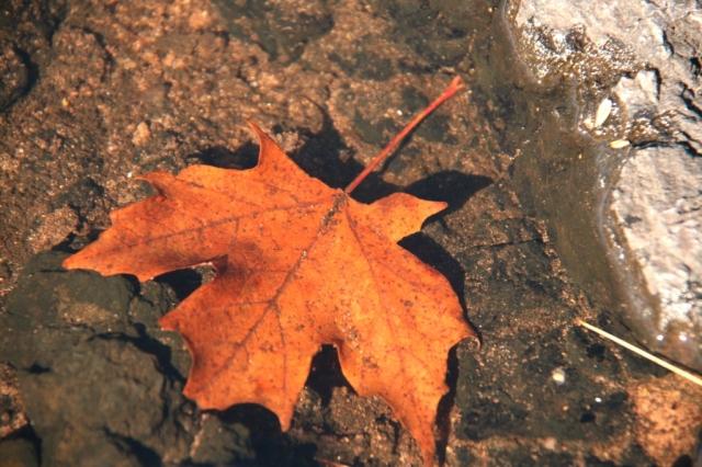Leaf falls below