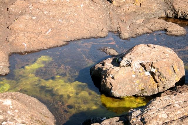 Bright green algae provides contrast