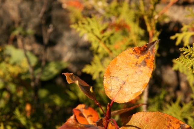 Autumn colors are so beautiful