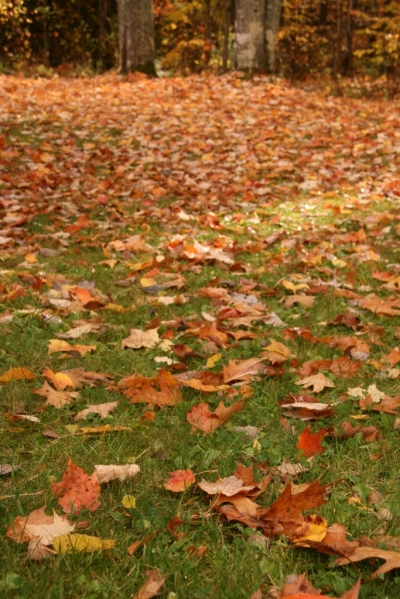 Up close fallen leaves