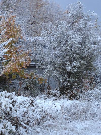 Welcome to winter!  It is beautiful, isn't it?
