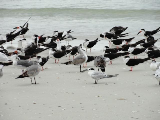Beach flock