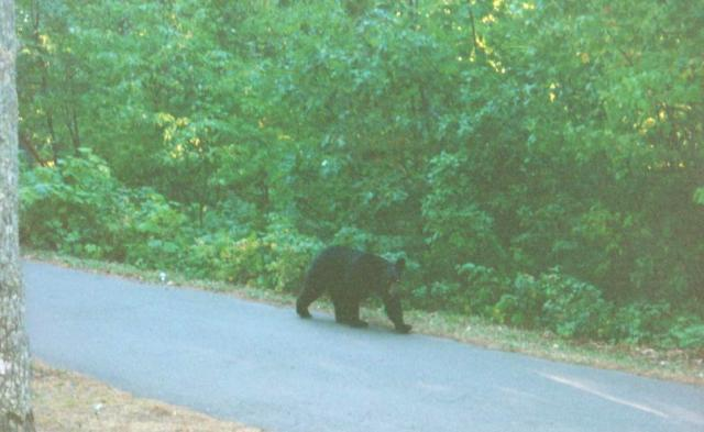 ...she runs after a bear to get its picture!