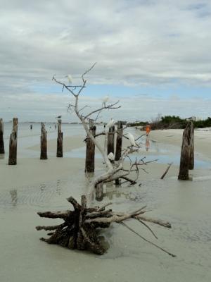 Driftwood perch