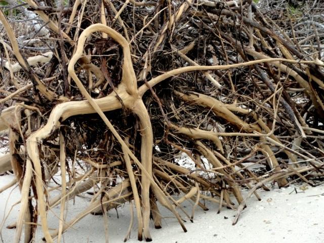 Driftwood loop