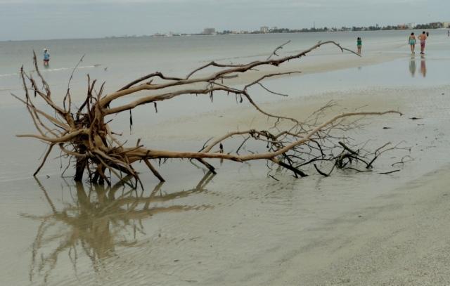 Driftwood sweep