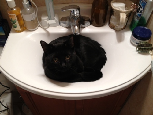 Kinder in the sink