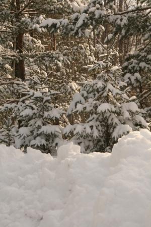 Deep snow