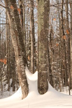 Among oaks