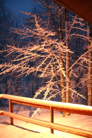 The woods before dawn illuminated by our deck light