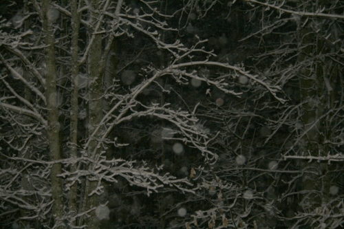 The snowy forest at night