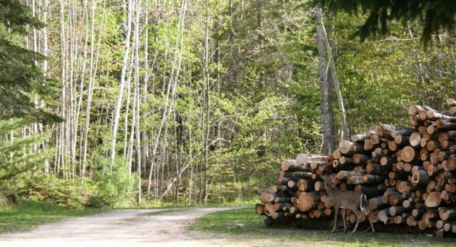 Deer by the log pile