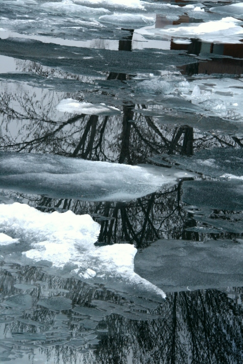 Tree in ice reflections, Marquette Harbor