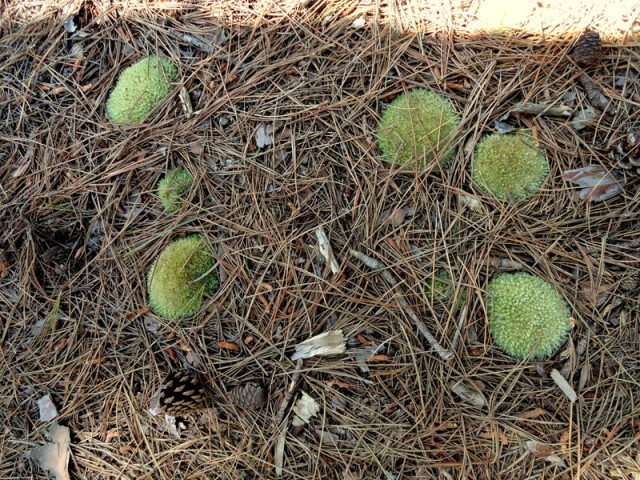Circles of moss