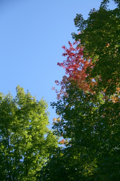 Oh, but look, a splash of autumn's red