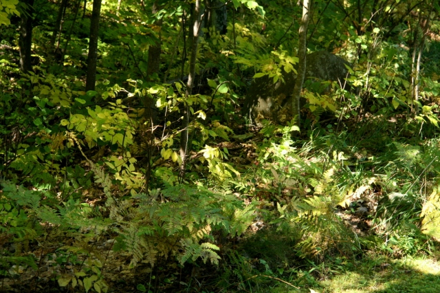 A sea of green and brown ferns down below the deck